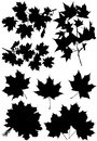stock image of  Set maple branches and leaves.