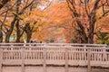 Maple corridor or Momiji Kairo Royalty Free Stock Photo
