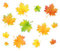 Maple foliage set isolated in the autumn Royalty Free Stock Photo
