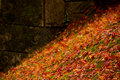 Maple on the ground Royalty Free Stock Photo