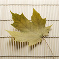 Maple leaf on bamboo mat. Royalty Free Stock Photography