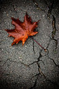 Maple leaf on the broken pavement Royalty Free Stock Image