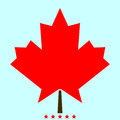 Maple leaf it is color icon .