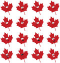 Maple Leaf Faces Royalty Free Stock Images