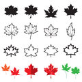Maple leaf icons isolated on a white background