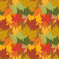 Maple leaf seamless background Stock Photo