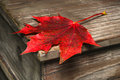 Maple leaf on a wooden box Royalty Free Stock Images