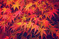 Maple leave in autumn season Stock Images
