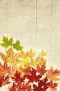 Maple leave colorful of different size on a wood background vintage Stock Photo
