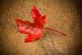 Maple Leave on wooden table Royalty Free Stock Photo