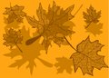 Maple leaves autumn background with eps Stock Image