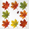 Maple leaves in autumn, set. Vector illustration Stock Photos