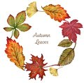 Maple leaves with colorful leaves watercolor wreath elements of
