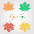 Maple Leaves Logo Isolated On ...