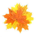 Maple leaves pile Stock Photos