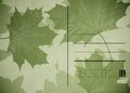 Maple leaves post card green acer background Stock Photos