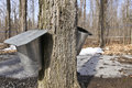 Maple sap buckets Royalty Free Stock Photos