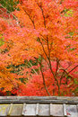 Maple in temple japanese style roof a with colorful leaves Royalty Free Stock Photography