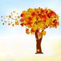 Maple tree, autumn leaf fall. EPS 8