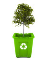 Maple tree growing in recycle bin Royalty Free Stock Photography