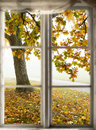 Maple tree viewed through window Royalty Free Stock Photo