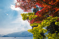 Maple trees overlooking lake como italy under the two colorful maples one with green other with red leaves overlook in northen sun Stock Photo