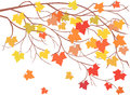 Maple vector image of a brunch with falling leaves Stock Photo