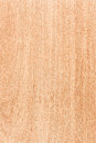 Maple wood texture high detailed series Stock Photography
