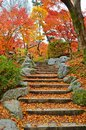 Maples leaf stairs Royalty Free Stock Image