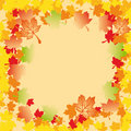 Mapple Autumn Leaves Stock Photography
