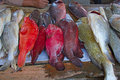 Maputo fish market Royalty Free Stock Images