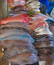 Maputo fish market Royalty Free Stock Photo