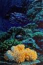 Marine life Orange coral in Ocean Background studio shot