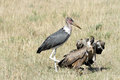 Marabou stork and vultures the is a large wading bird a vulture is a large scavenging bird Stock Photo