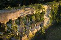Marble banister a classic italian with bushes of ivy in the sunset sunlight Royalty Free Stock Image