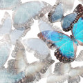 Marble butterflies Stock Photos