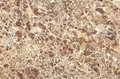 Marble texture background,