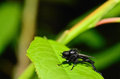March fly view large on a leaf Royalty Free Stock Photo