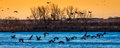 MARCH 8, 2017 - Grand Island, Nebraska -PLATTE RIVER, UNITED STATES Migratory water fowl and Sandhill Cranes are on their spring m Royalty Free Stock Photo