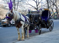 March new york city a horse drawn carriage waits near with purple headdress to take customer on ride through central park in Royalty Free Stock Photo