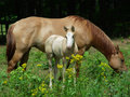 Mare and colt in pasture Stock Photo