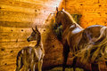 Mare and filly in stall her one week old egyptian arabian eating hay Royalty Free Stock Photo