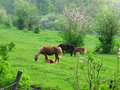 Mare and foal grazing in field Royalty Free Stock Photo