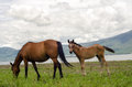 Mare and foal horses grazing by lake with mountains in background Stock Photography