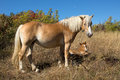 Mare and foal laying over ground Stock Images