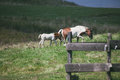 Mare and foal on pasture Royalty Free Stock Photo