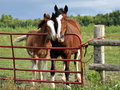 Mare and foal snuggle by gate Royalty Free Stock Photo