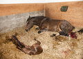 Mare gave birth to foals Royalty Free Stock Photo