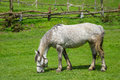 Mare grazing on spring pasture Royalty Free Stock Photo