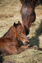 Mare and newborn foal Royalty Free Stock Photo